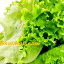 Полезность салата